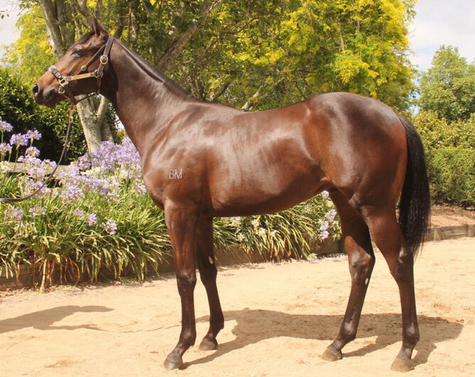 Mongolian Lightning as a Yearling