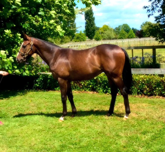 Compassion Star As A Yearling